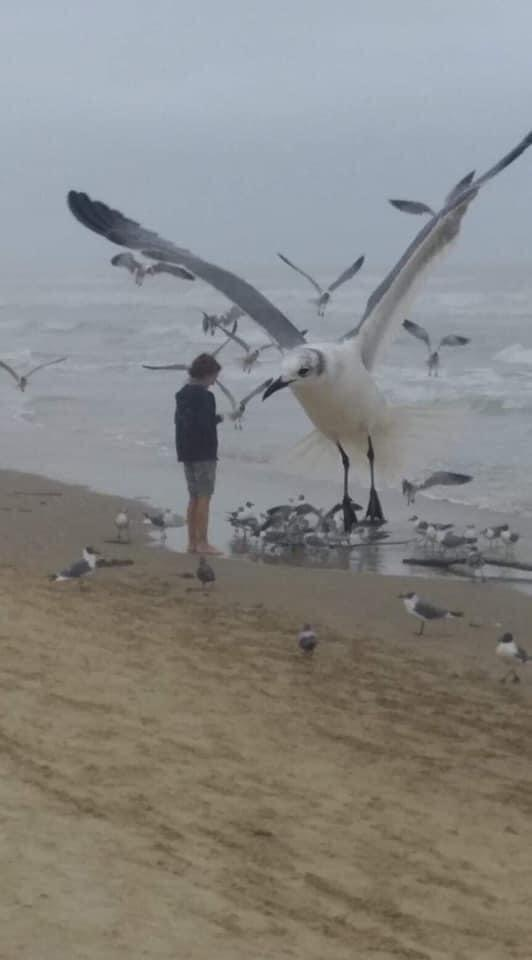large seagull forced perspective